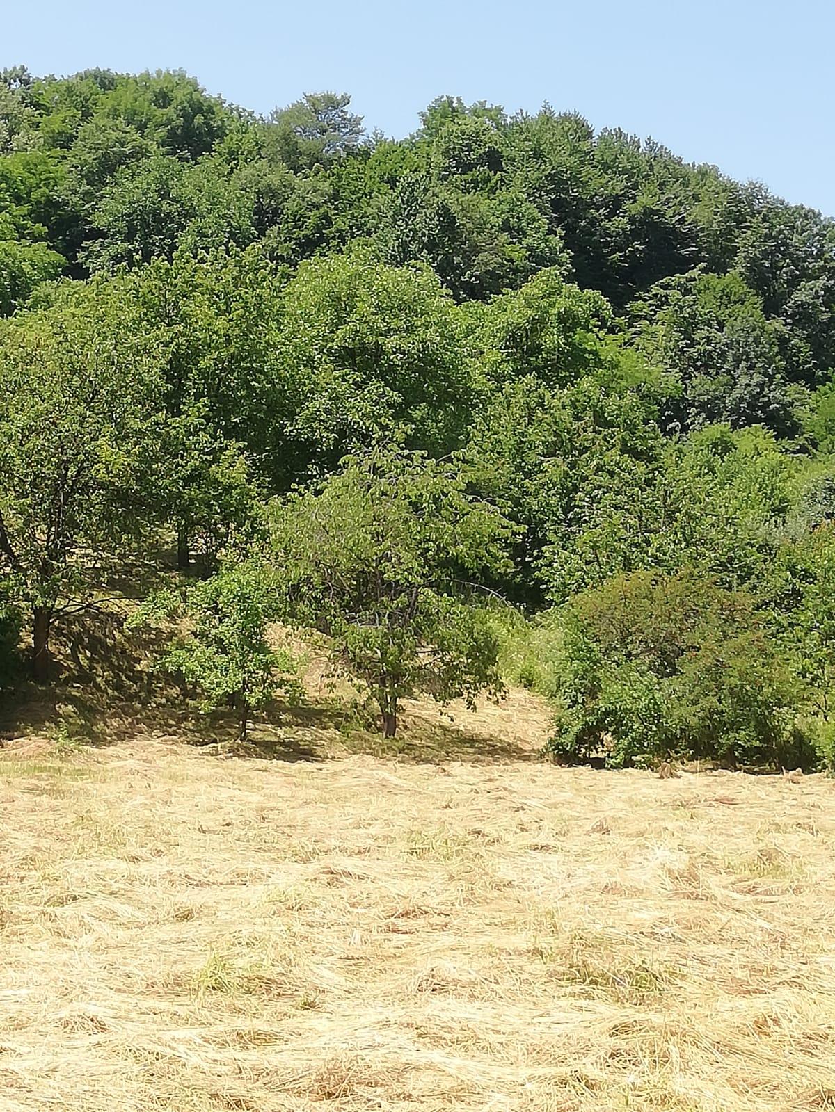 Vanzare teren intravilan Tatarani Dambovita